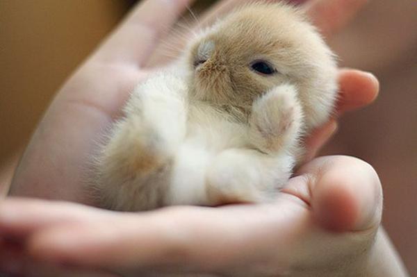Крохотный детеныш на руках
