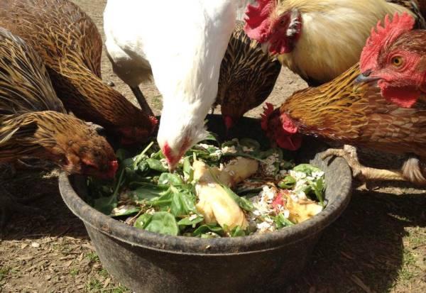 Птицы доедают объедки со стола