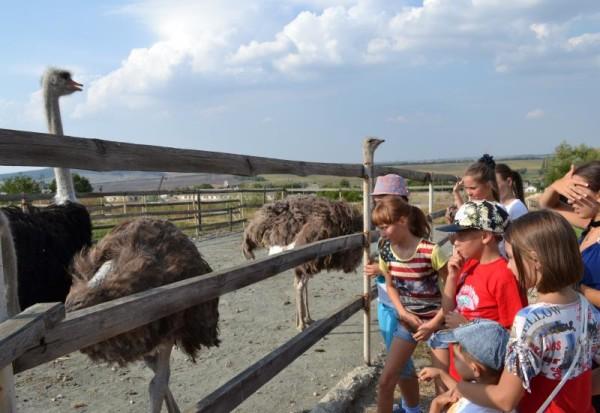 Дети смотрят на страусов в Денисовке