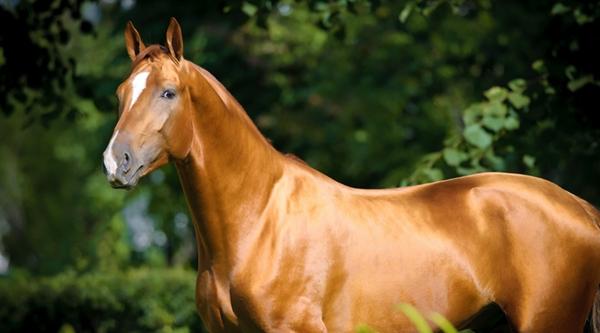 Рыжий конь на фоне листвы
