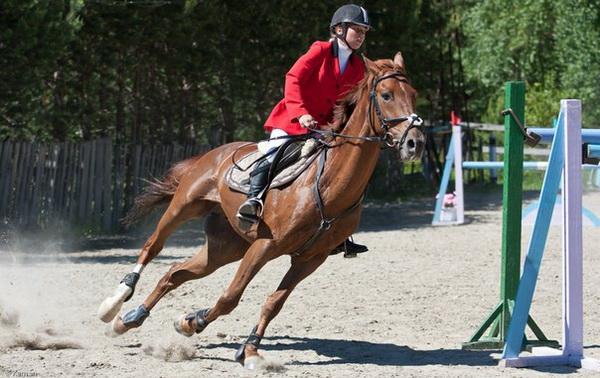 Порода лошадей имени Буденного или просто буденновская