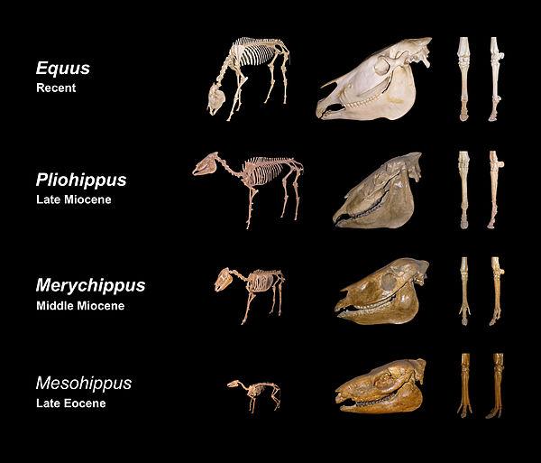 Эволюция вида