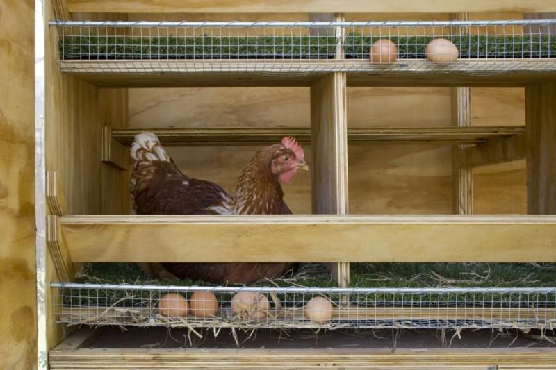 Гнездовое сооружение с яйцесборником