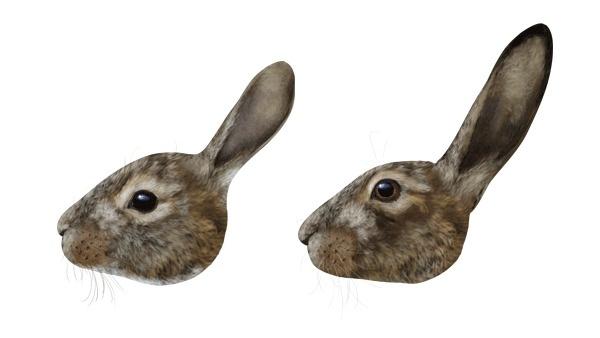 Голова кролика и зайца