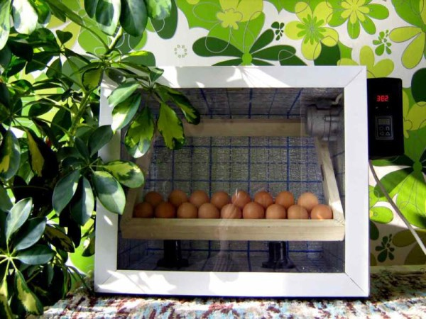 Инкубатор-автомат (с переворотом яиц)