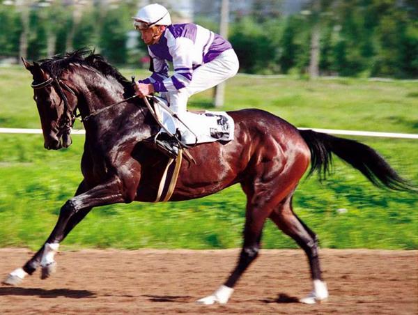Спортивная лошадь со всадником на скачках
