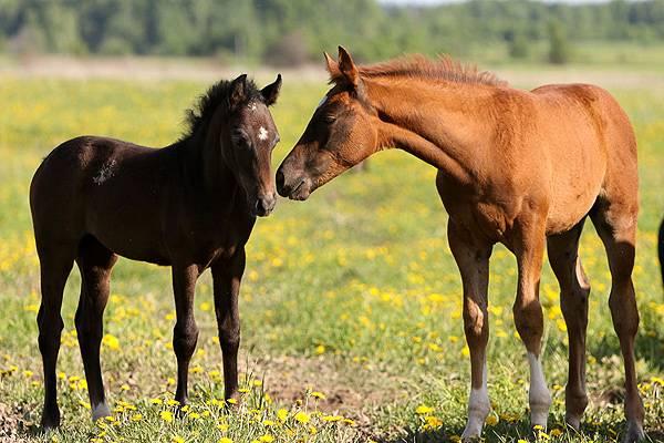 Лошадь со своим жеребенком в поле
