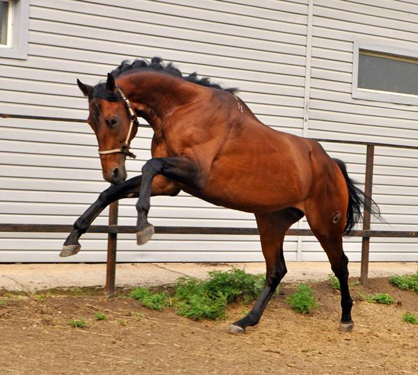 Лошадь скачет в своем загоне