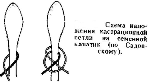 Кастрационный узел