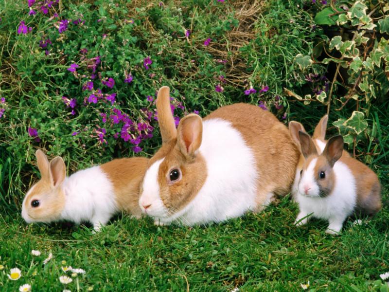 Крольчиха с кроликами на природе