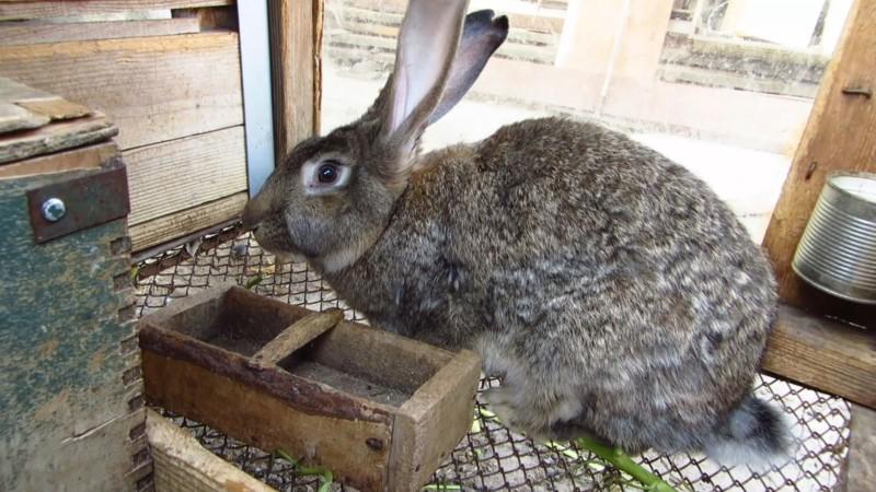 Кролик перед забоем