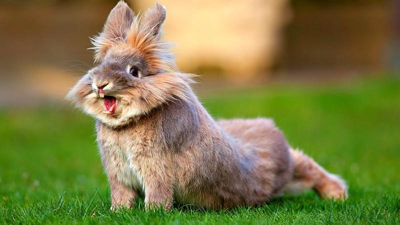 Кролик потягивается