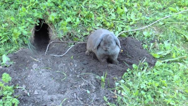 Кролик у норы