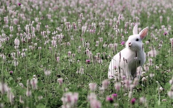 Кролик прячется в траве