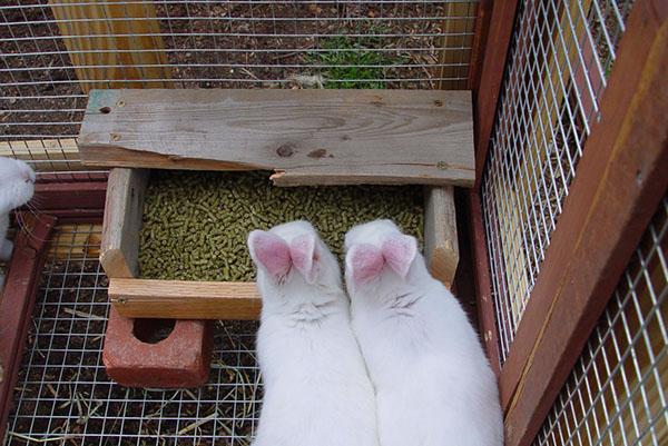 Кролики кушают корм