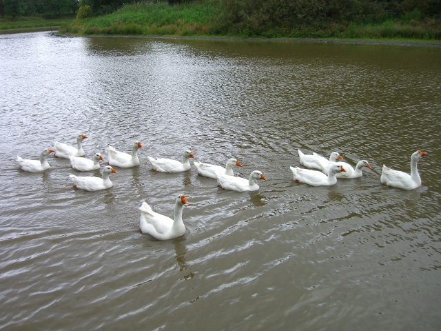 Линда купаются в озере