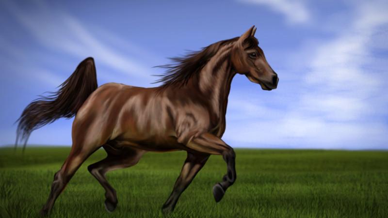 Лошадь быстро скачет