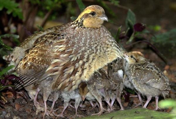 Маленькая птица с птенчиками