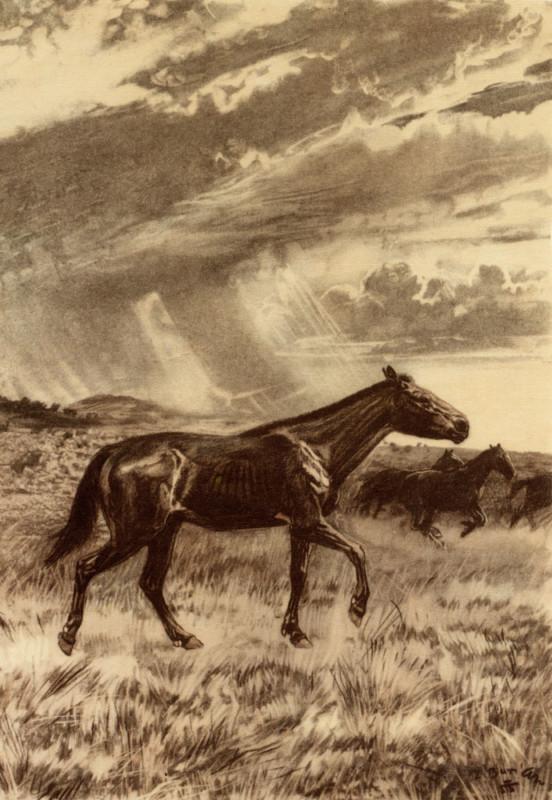 Рисунок, изображающий мерикгиппуса