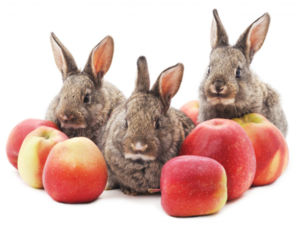 Три кролика и яблоки