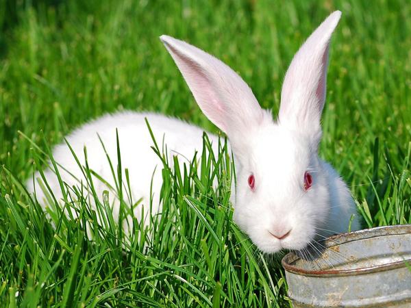 Кролик лежит на травке