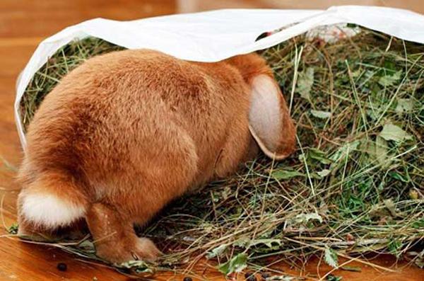 Кролик залез в пакет с сеном