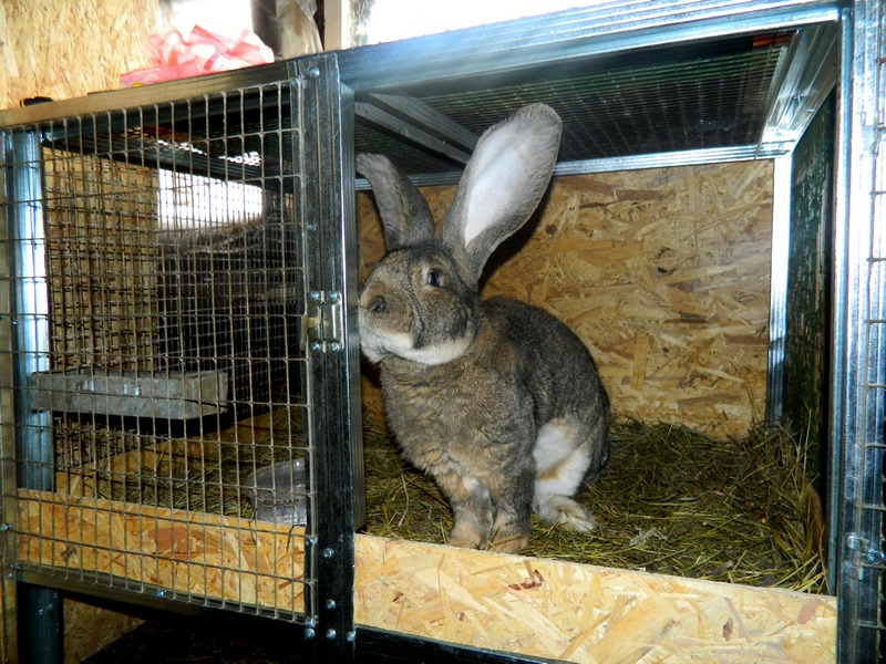 Отдельное содержание кролика