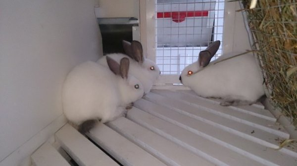Кролики на страусиной ферме