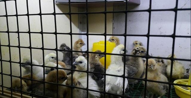 Помещение для содержания птиц