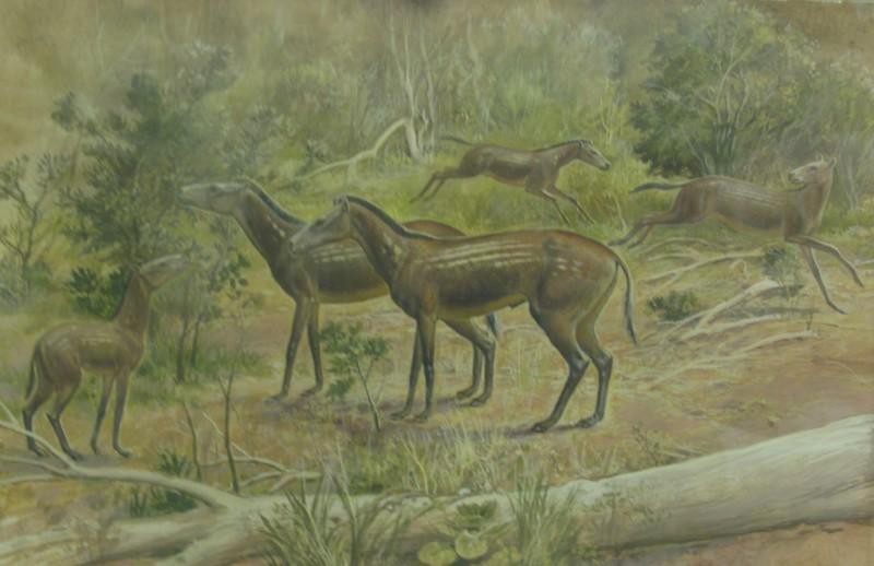 Рисунок с мезогиппусом