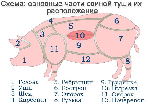 Схема части свиной туши