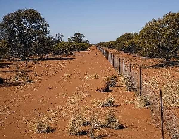 Забор в Австралии для защиты от кроликов