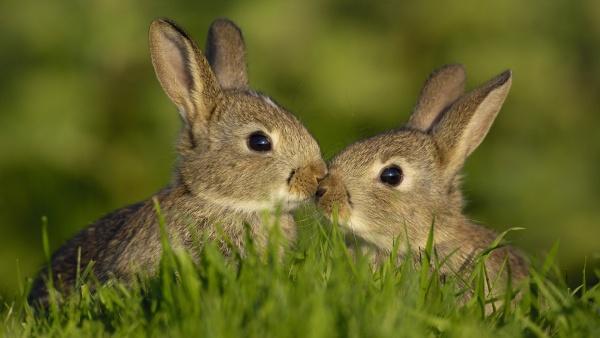 Зайчата в траве