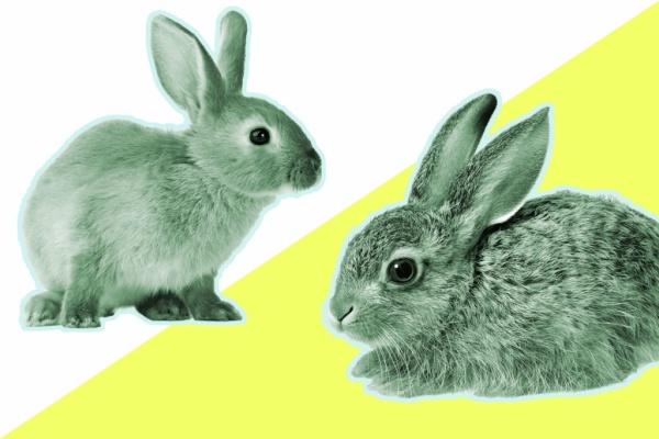 Заяц vs кролик