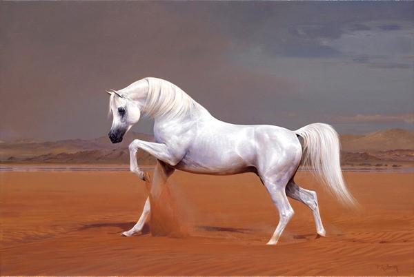 Серый араб в пустыне