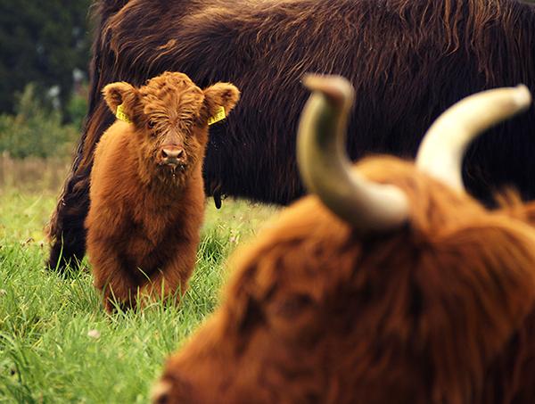Маленькие рыжие коровки на лугу