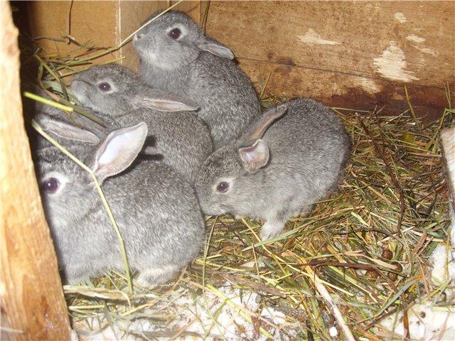 Кролики бесятся в клетке