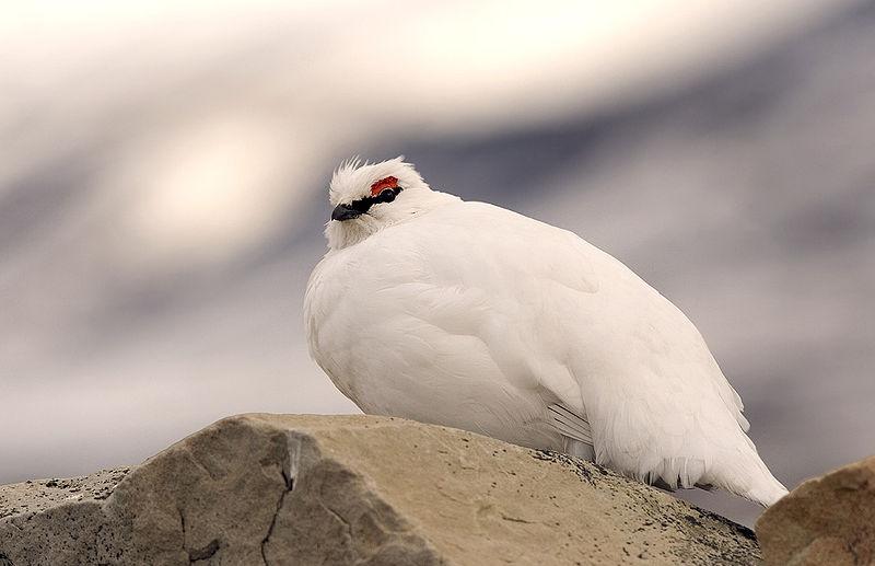 Птица сидит на камне