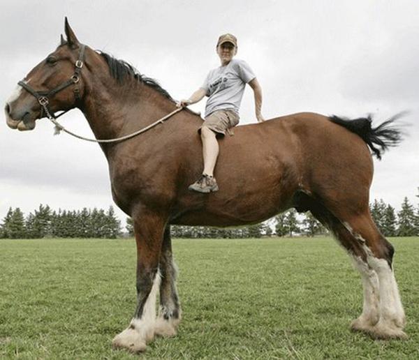 Человек сидит на огромном коне