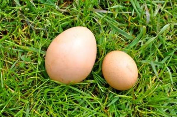 Большое и маленькое яйцо на траве
