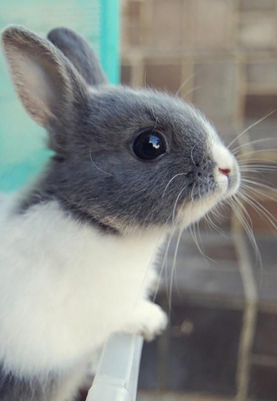 Крольчонок у стены