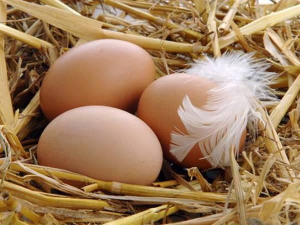 Три куриных яйца в гнезде