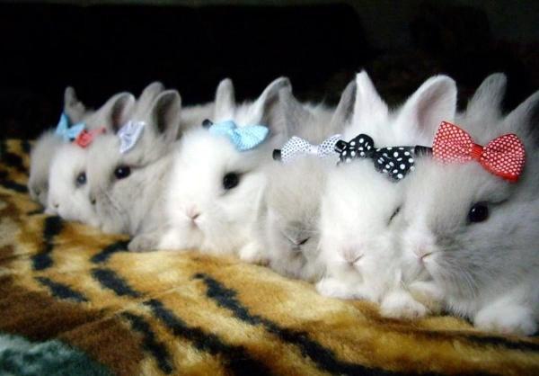Много декоративных кроликов с бантиками