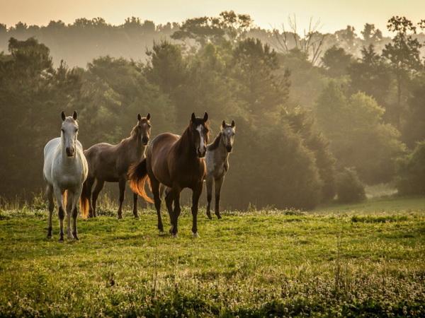 Лошади разных окрасов на лугу
