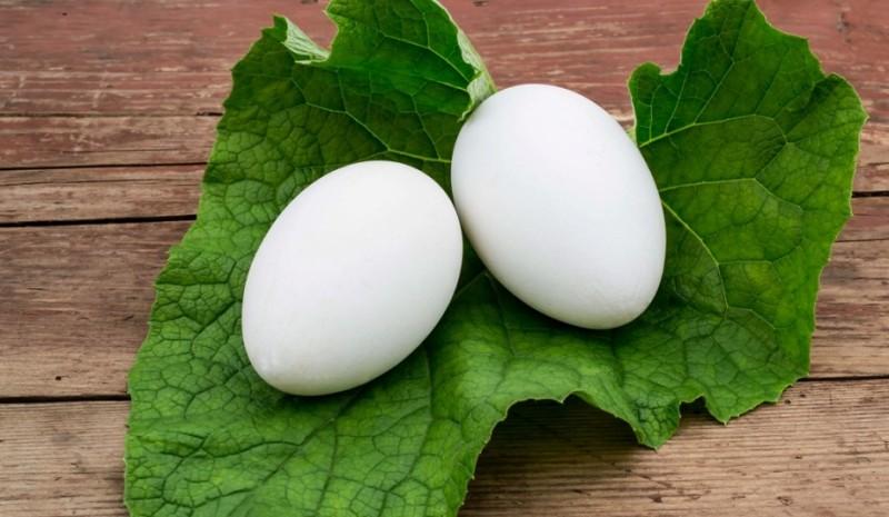Два белых яйца на листике растения