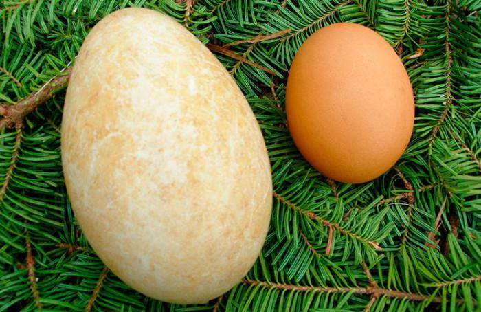Гусиное и куриное яйца на хвойных ветках