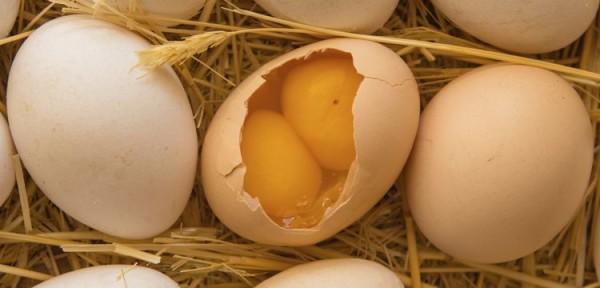 Яйцо с двумя желтками рядом с нормальными