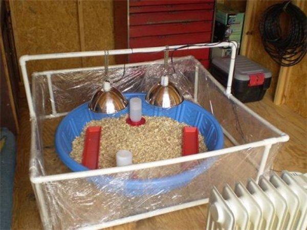 Альтернативный ящик для цыплят