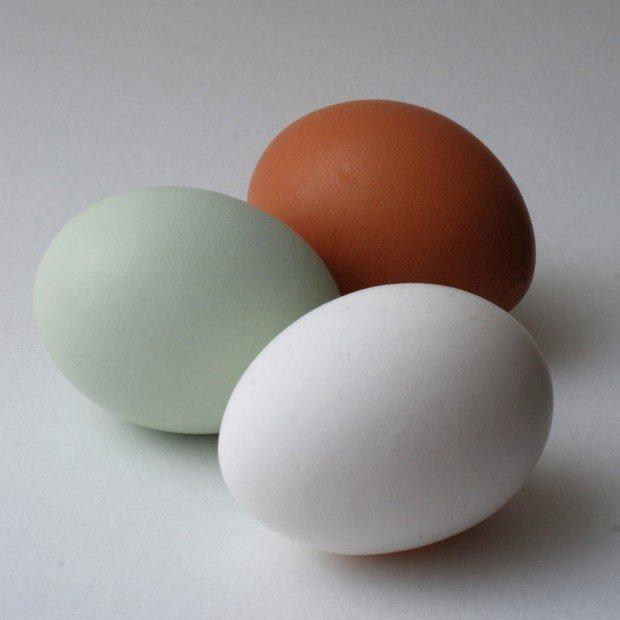 Белое, голубое и коричневое яйцо