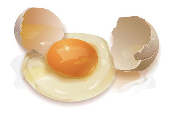 Скорлупа и содержимое яйца